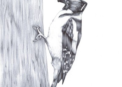 Drilling-Woodpecker-2117V2