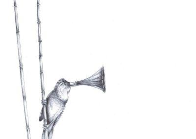 Grammaphonehorned-Reedwarbler-2117V2