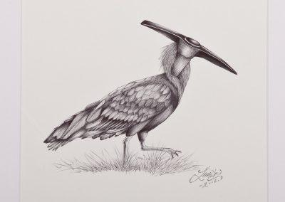Studio-071---Tim-Juffermans---Pick-axe-Ibis